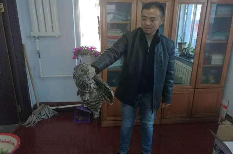 泉阳千亿体育游戏网站登陆成功救助、放飞国家二级保护野生动物猫头鹰
